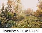fog in early morning in late... | Shutterstock . vector #1205411377