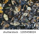 autumn leaves on the road. wet. ... | Shutterstock . vector #1205458024
