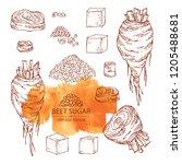 collection of beet sugar  sugar ... | Shutterstock .eps vector #1205488681