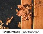 Autumn Leaf On A Park Bench...