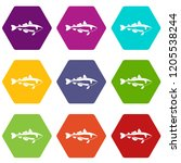 sea fish icons 9 set coloful...   Shutterstock .eps vector #1205538244