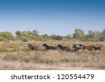 wild horses running in grass | Shutterstock . vector #120554479