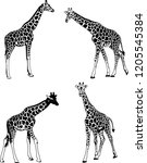 Giraffes Sketch Illustration...