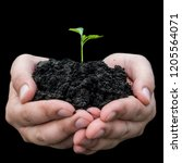 farmer hand holding a fresh... | Shutterstock . vector #1205564071