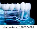 dentist dental teeth teaching...   Shutterstock . vector #1205566081