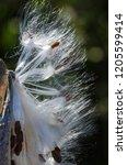 nature abstract  elegant white...   Shutterstock . vector #1205599414