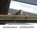 fluffy colourful bird looking... | Shutterstock . vector #1205616454