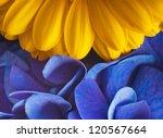 Bouquet From Blue Hydrangeas...