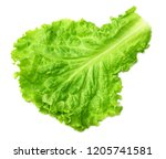 one salad leaf isolated on a... | Shutterstock . vector #1205741581