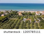 olive grove and adriatic coast... | Shutterstock . vector #1205785111