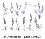 black line lavender. vector... | Shutterstock .eps vector #1205789524
