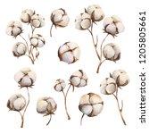 watercolor winter cotton bowls | Shutterstock . vector #1205805661
