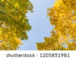 deciduous forest at autumn.... | Shutterstock . vector #1205851981