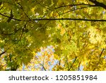 deciduous forest at autumn.... | Shutterstock . vector #1205851984