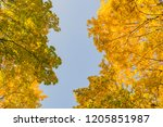 deciduous forest at autumn.... | Shutterstock . vector #1205851987