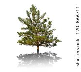 a beautiful pine with long... | Shutterstock . vector #1205866711