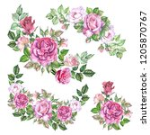 set of roses illustrations... | Shutterstock . vector #1205870767