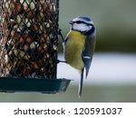 Bluetit Sitting On A Birdfeede...