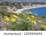 california nature   pacific... | Shutterstock . vector #1205943694