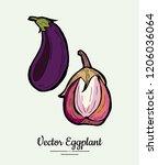 eggplant   hand drawn... | Shutterstock .eps vector #1206036064