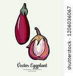 eggplant   hand drawn... | Shutterstock .eps vector #1206036067