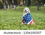 Cute Golden Retriever Dog...