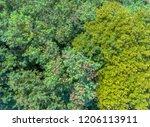 green deciduous forest top down ... | Shutterstock . vector #1206113911