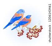 birds thrush small bluebirds ... | Shutterstock .eps vector #1206143461