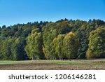 birches against a dark ... | Shutterstock . vector #1206146281