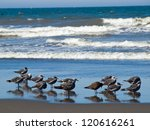a variety of seabirds at the... | Shutterstock . vector #120616261