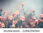 autumn marigold background | Shutterstock . vector #1206256564