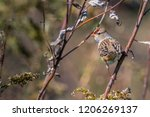 songbird in nature | Shutterstock . vector #1206269137