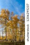 golden fall. silver birch ... | Shutterstock . vector #1206295237