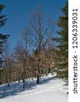 snowy deciduous forest. | Shutterstock . vector #1206339031
