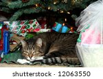 Cat Under Christmas Tree With...