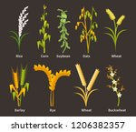ereals and legumes of various... | Shutterstock .eps vector #1206382357