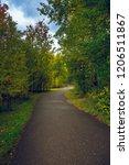 deciduous autumn forest grows... | Shutterstock . vector #1206511867