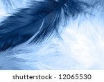 close up of  feather on... | Shutterstock . vector #12065530