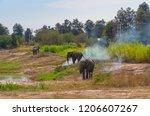 asian elephants standing around ... | Shutterstock . vector #1206607267