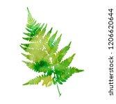 watercolor fern leaf silhouette ... | Shutterstock . vector #1206620644