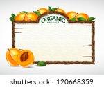 apricot menu board | Shutterstock .eps vector #120668359