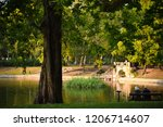 relax under big maple tree on... | Shutterstock . vector #1206714607