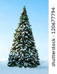 Big Christmas tree on snow, background of blue sky - stock photo