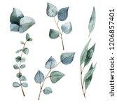 watercolor green eucalyptus   Shutterstock . vector #1206857401