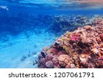 coral reef in egypt with color... | Shutterstock . vector #1207061791
