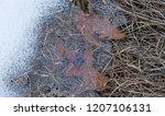 late autumn  first snow.... | Shutterstock . vector #1207106131