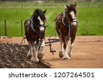 Clydesdale Horses Pulling...