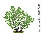 abstract vector bush | Shutterstock .eps vector #120726649