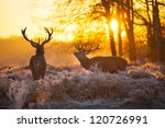 red deer | Shutterstock . vector #120726991
