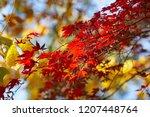 season of beautiful autumn... | Shutterstock . vector #1207448764